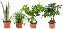 Mix (Aloe Vera, Kastanie, Palm-, Katzenminze) | 4