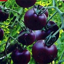 MixColors Tomatensamen 100pcs Garden & Home Gemüsesamen Violett Blau Leicht Einpflanzen Farming Verschiffen frei Tomaten Samen 4