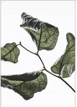 Moebe - Floating Leaves No. 3, A3