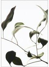 Moebe - Floating Leaves No. 9, A3