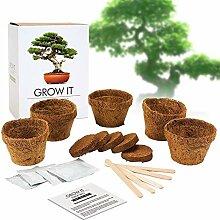 Monsterzeug Bonsai Baum zum Selberpflanzen,