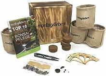 Montagsliebe® Bonsai Starter Kit Premium Geschenk