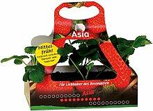 Müllers Grüner Garten Shop Erdbeere Sorte Asia