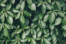 Muralo Fototapete Blätter Natur 150 x 225 Vlies