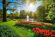 Muralo Fototapete Garten Voller Tulpen 180x270