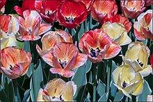 Muralo Fototapete Schöne Bunte Tulpen 90x135