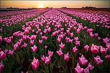 Muralo Fototapete Tulpen bei Sonnenuntergang