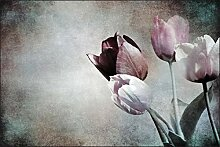 Muralo Fototapete Tulpen im Vintage-Stil 150x225
