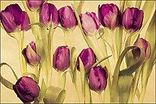 Muralo Fototapete Tulpen Wie Gemalt 270x405 Vlies
