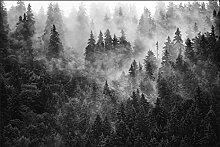 Muralo Fototapete Wald im Nebel 210 x 315 cm Vlies