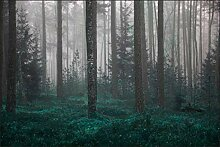 Muralo Fototapete Wald im Nebel 240 x 360 cm Vlies