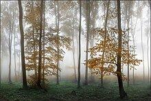 Muralo Fototapete Wald im Nebel 270 x 405 cm Vlies