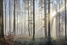 Muralo Fototapete Wald im Nebel 60 x 90 cm Vlies