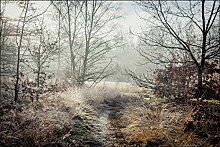 Muralo Fototapete Wald im Nebel 90 x 135 cm Vlies