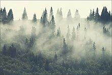 Muralo Vlies Fototapete 180x120 Wald im Nebel