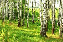 Muralo Vlies Fototapete 254x184 Natur Wald Tapete