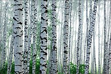 Muralo Vlies Fototapete 312x219 Natur Wald Tapete