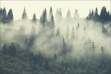Muralo Vlies Fototapete 360x240 Wald im Nebel