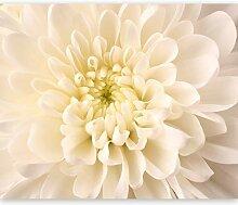 murando - Fototapete 250x193 cm - Vlies Tapete -