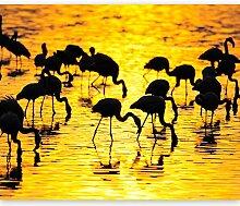 murando Fototapete Flamingo 300x231 cm Vlies