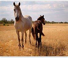 murando Fototapete Pferde 200x154 cm Vlies Tapeten