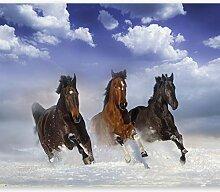 murando - Fototapete Pferde 300x210 cm - Vlies