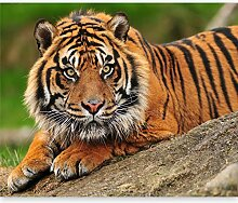 murando Fototapete Tiger 200x154 cm Vlies Tapeten