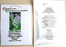 Muskatella-Salbei Zierpflanze Heilpflanze