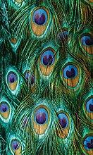 Myspotti LK-S-1099 Fensterfolie Peacock Feathers