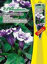 N.L. Chrestensen 50318 Engelstrompete Violettblau