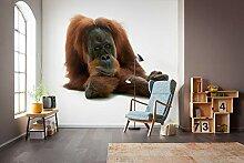 National Geographic Vlies Fototapete von Komar