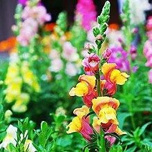 NAttnJf Samen zum Pflanzen, 150 Stück