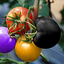 NAttnJf Samen zum Pflanzen, 200 Stück