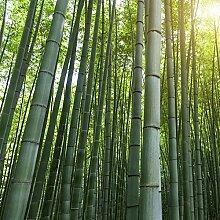NAttnJf Samen zum Pflanzen, 50 Stück Bambussamen