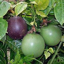 NAttnJf Samen zum Pflanzen, 50 Stück / Beutel