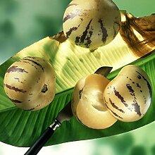 NAttnJf Samen zum Pflanzen, 50 Stück Pepino Samen