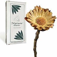 Nature Parts Compacta Rosette Klein (3-4cm)
