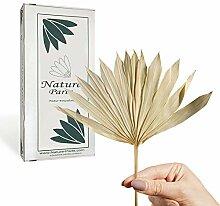Nature Parts Sun Palm Cut mit Stiel in Gebleicht