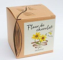 Naturkraftwerk Anzuchtset Fleur de Chocolat,