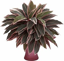 Nearly Natural Caladium Artificial Plant in Rose