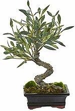 Nearly Natural Fast Natur Mini Olive Künstliche
