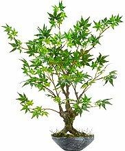 Nearly Natural Künstlicher Bonsai-Übertopf, 76,2