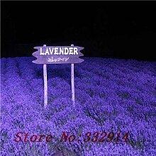 Nein 200 Lavendel Samen - hart und hitzeverträglich DIY Topfpflanzen duftende Blumensamen Pflanze, leicht wachsend