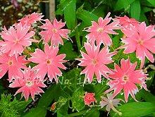 Neue Ankunfts-100 PC / bag Phlox Pflanzen, Phlox-Samen Phlox Blumen Bonsai Blumensamen 10 Farben vergossen DIY Hausgarten Pflanze 3
