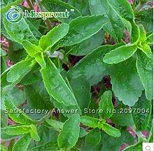 Neue frische Samen Stevia Samen, Stevia Kräuter Samen, Grün, Kräuter, Stevia Rebaudiana Semillas für Garten Errichten - 200 Teilchen