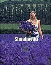 Neues 200 PC Lavendel Bonsai Kraut plantd Garten