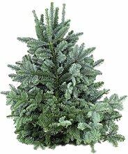 Nobilis Tanne Zweige 5kg,Dekoration,Weihnachtsdeko,Basteln