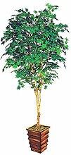 NORNDWZT Rot-Ahorn-Baum