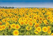 Oedim Fototapete Vinyl Wand Sonnenblume  