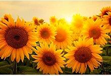 Oedim Fototapete Vinyl Wand Wand Sonnenblume  